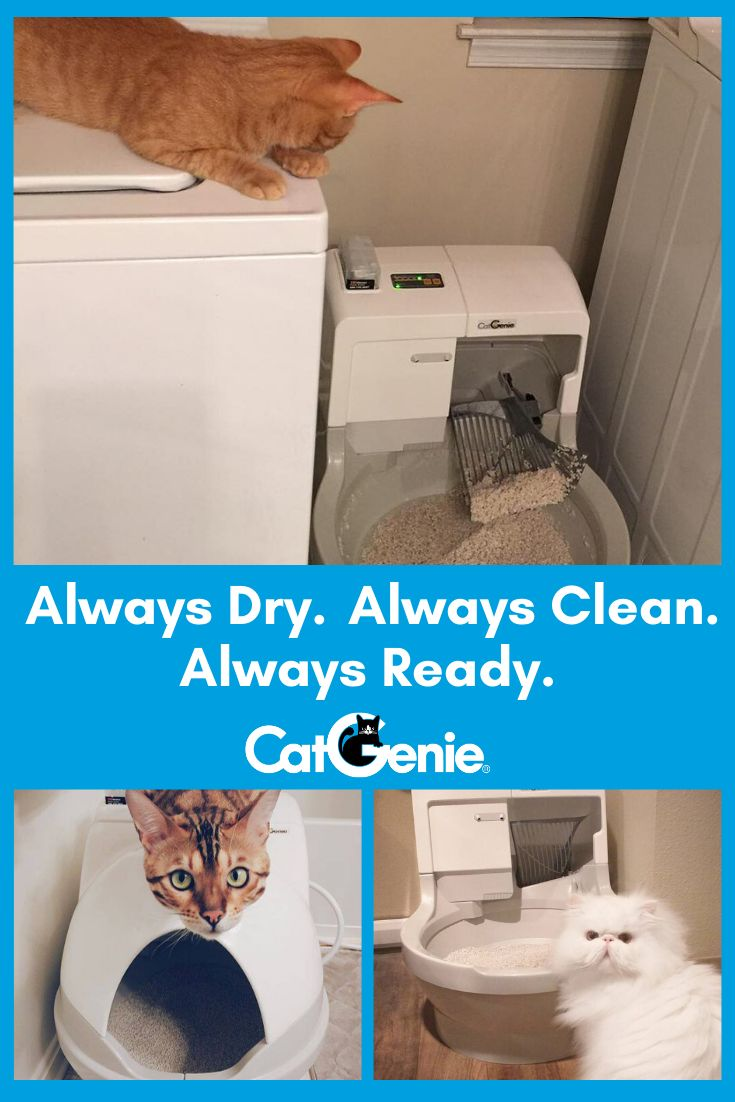 A Cat Box That Cleans And Flushes Itself After Every Use