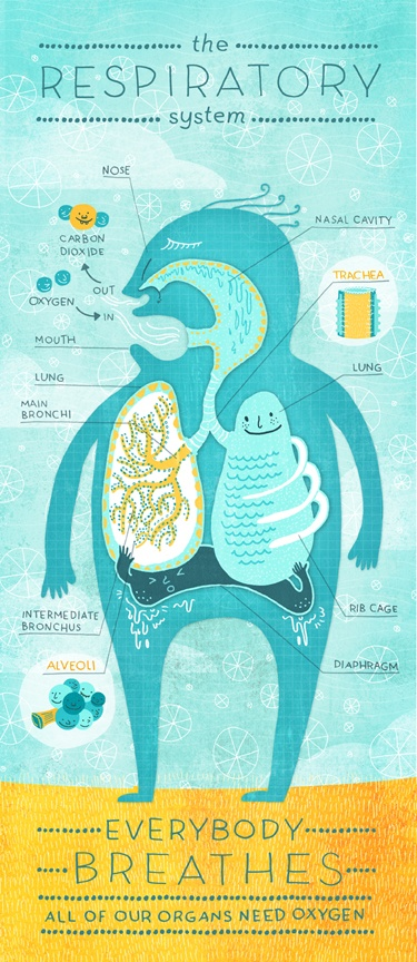 RESPIRATORY SYSTEM POSTER BY RACHEL IGNOTOFSKY