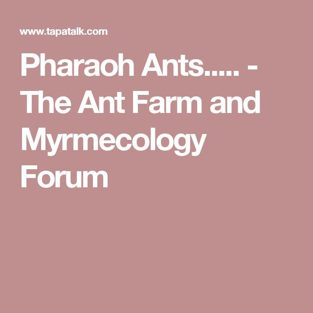 Pharaoh Ants..... - The Ant Farm and Myrmecology Forum