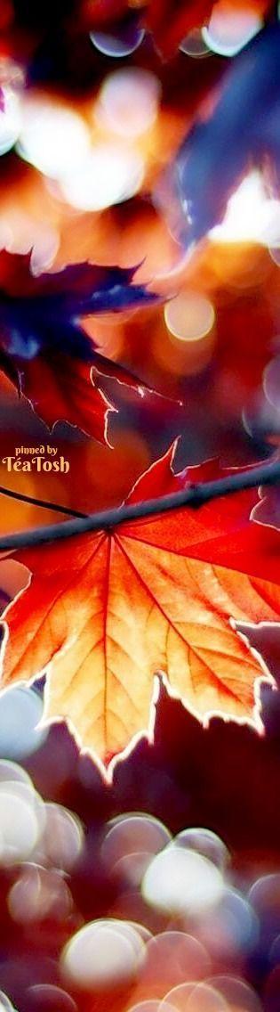 Téa Tosh Fall Bokeh