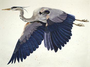 Heron Flying Left