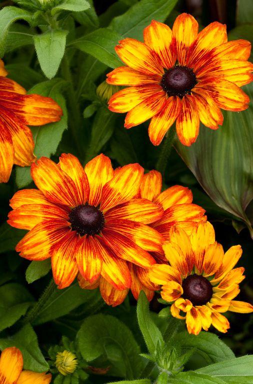 301 Best In The Fall Garden Images On Pinterest Garden