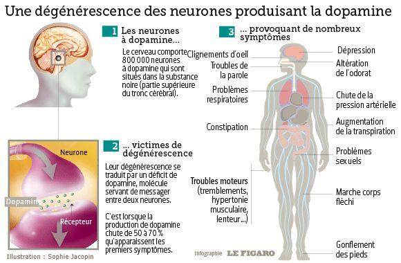 Maladie de Parkinson, de la cellule à l'homme                                                                                                                                                                                 Plus