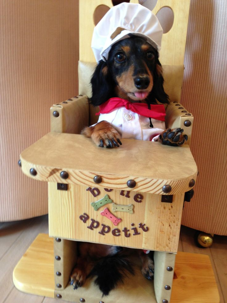 Bailey Chairs For Dogs With Canine Megaesophagus  Baileychairs4dogs Com