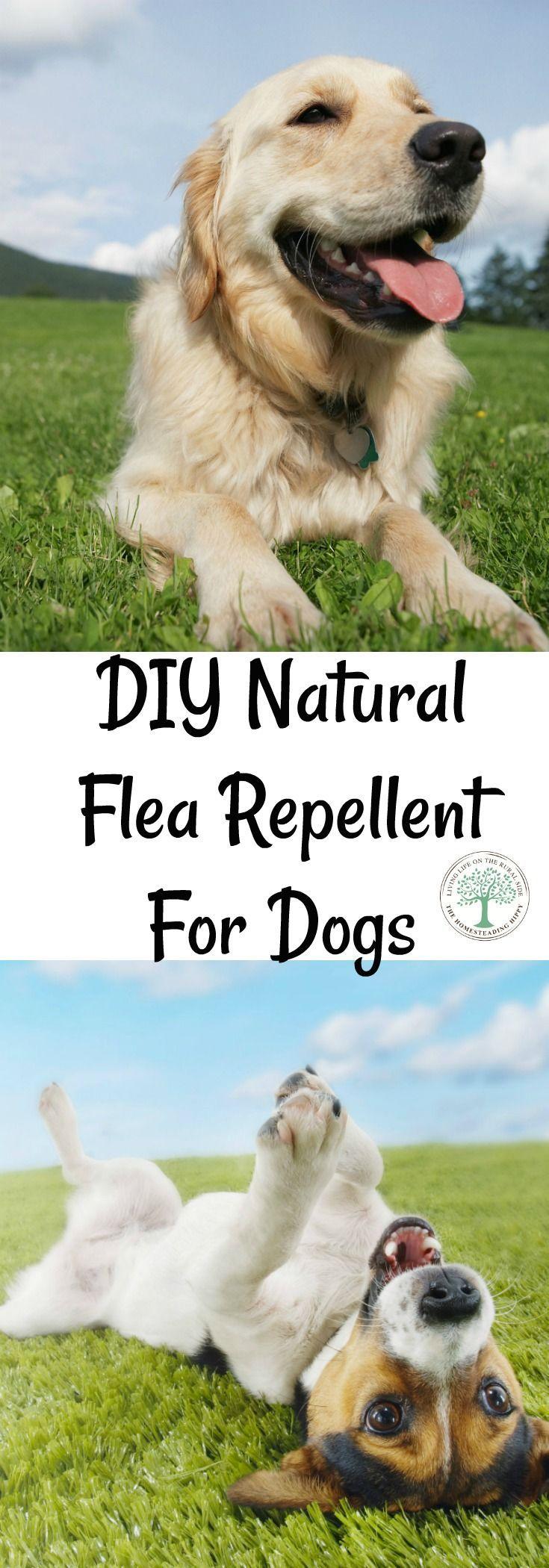 best 25 flea repellant ideas on pinterest natural flea remedies dog flea remedies and. Black Bedroom Furniture Sets. Home Design Ideas