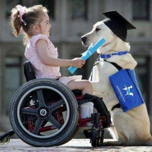 They say every dog has its day and for Assistance Dogs Australia's Super pups, their day is coming on Wednesday 17th April at their Graduation Ceremony in Martin Place, Sydney.