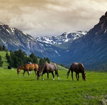 Peaks and Valleys in gorgeous Montana:  A shot of horses grazing at Grizzly Creek Ranch