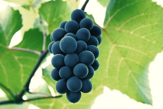 Újévi szerencsét hozó ételek - szőlő