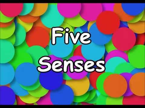The Five Senses Song | Silly School Songs - YouTube