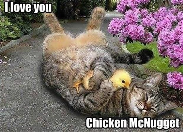 Chicken Quotes Hilarious: Best 25+ Funny Chicken Pictures Ideas On Pinterest