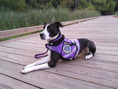 C E E Fadd B Bb on Emotional Support Dog Harness