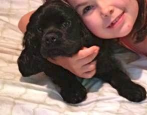 """Alberta's lost pet locator shared Lethbridge and Area - Lost & Found Pets's photo. Yesterday Posted by Teagan Petty on Tuesday, July 9th/2013: - LOST PUPPY - """"Missing our Cocker Spaniel Puppy. She got out of our South side backyard (near Sugar Bowl/Scenic Drive South) this afternoon. She has a pink collar with tags."""