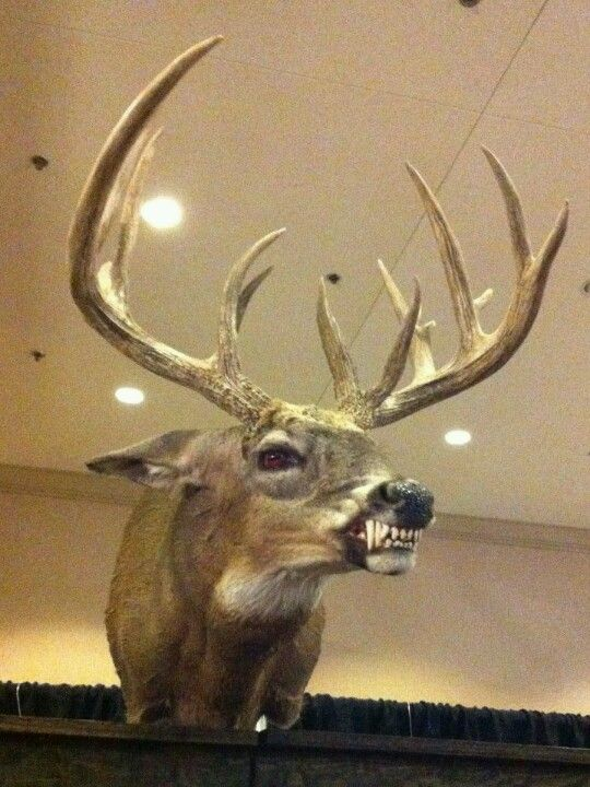 1007 best arts crafts time images on pinterest 1000 cranes a taxidermy deer with wolf teeth i should totally do this when i shoot a trophy deer solutioingenieria Images