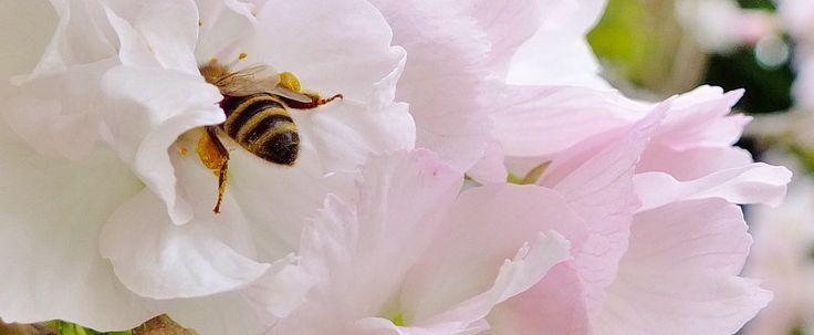 https://flic.kr/p/G6w22c | Spring Garden, May 2016