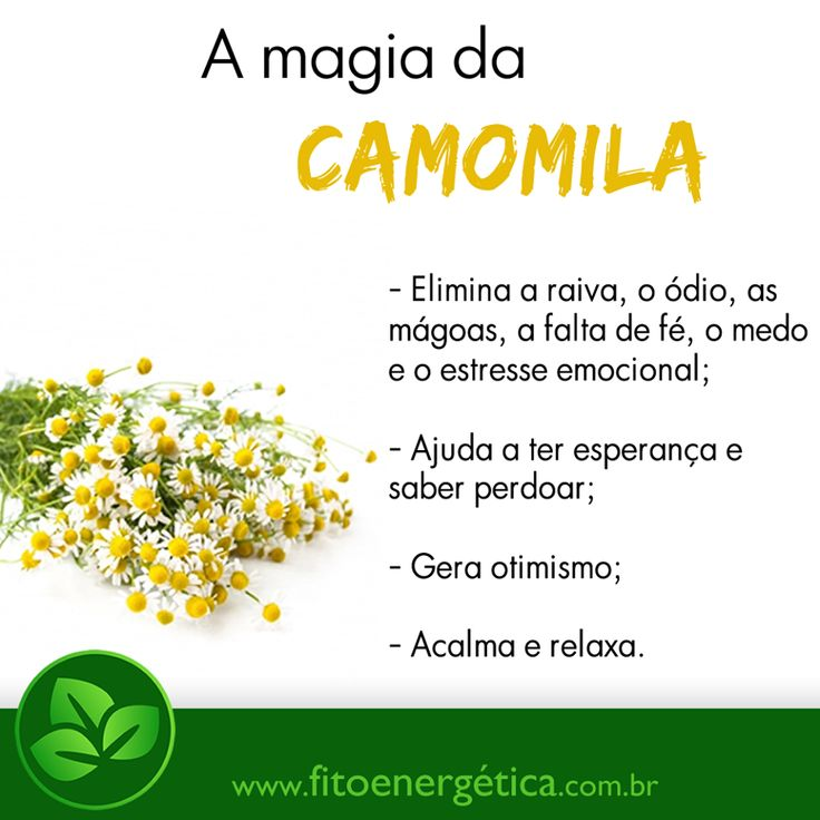 A magia da Camomila (FitoEnergética)