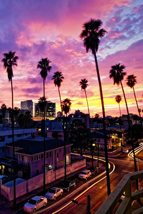 LA palm trees at Night - Bing Images | City shots ...