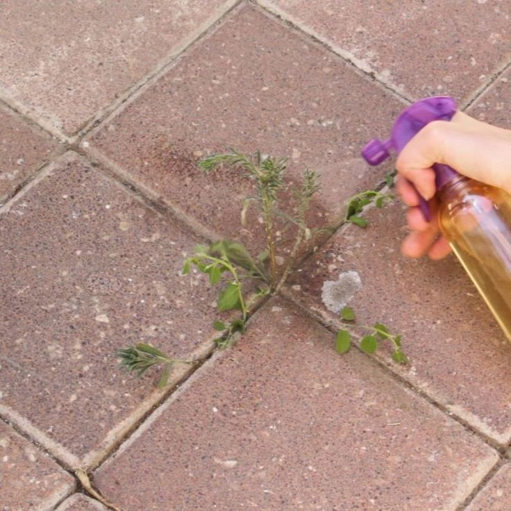 1000 ideas about vinegar weed killers on pinterest weed killers homemade weed killers and - Get rid weeds using vinegar ...