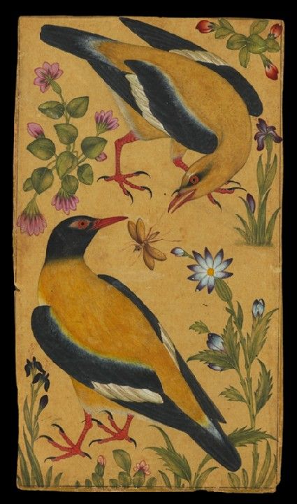 Style: Mughal; Type: Elephants, birds, and flowers; Title: 'Two orioles', north India, c. 1610