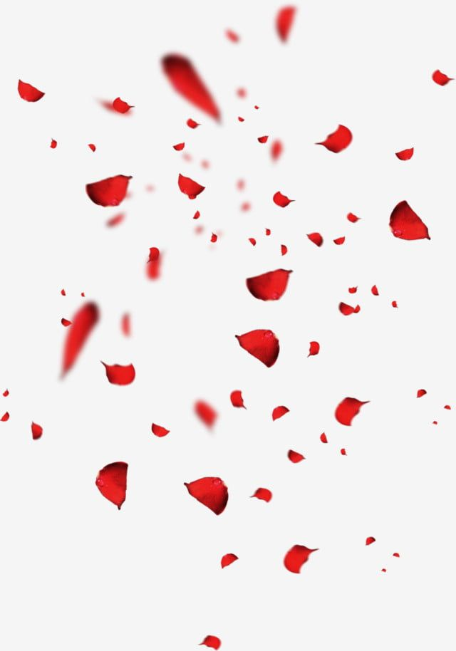 Red Petals Rose Petal Falling Petals Scattered Petals Png Transparent Clipart Image And Psd File For Free Download Rose Petals Falling Flower Png Images Red Petals