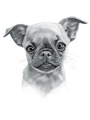 Chug Dog