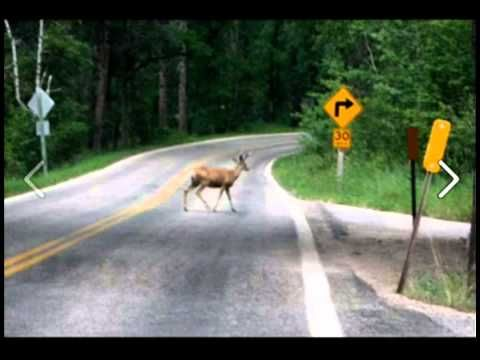 OH, Please be true. I am in tears from this!   Blonde Moment - Deer Crossing - Radio Station