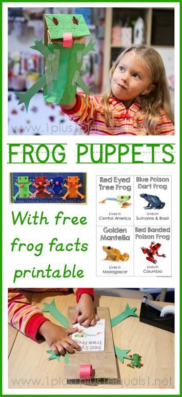 Adorable frog puppet craft with frog facts printable to learn more about the frogs!  Red Eyed Tree Frog and other frogs included. Great for a frog unit study!