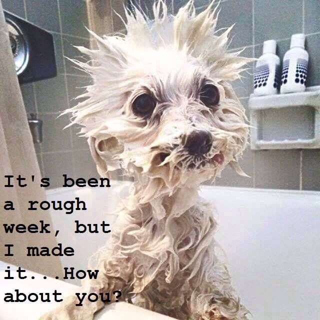 How Adorable! This is what Tank looks like when he gets a bath!