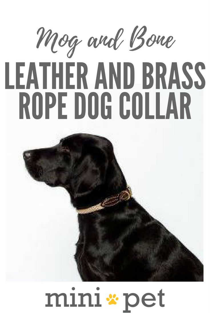 [SALE] Made from genuine leather and high-quality brass fittings, this understated and stylish collar will look super cool on your pooch.  Matching lead sold separately.