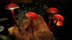Enchanted Forest Mushroom Lights http://www.instructables.com/id/Enchanted-Forest-Mushroom-Lights/?ALLSTEPS