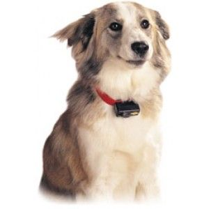 A Bark Collar is a safe, humane and effective way to quickly control and stop excessive nuisance barking. While not at all harmful, a Bark Control Collar is an effective deterrent to excessive barking.