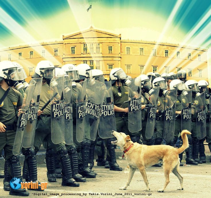 Meet Loukanikos, Athens' Protest Dog