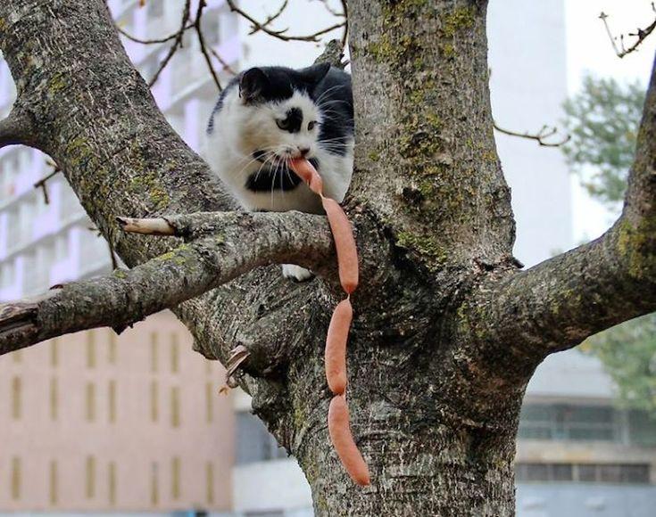 cat steals sausages...15 funny cat thief photos