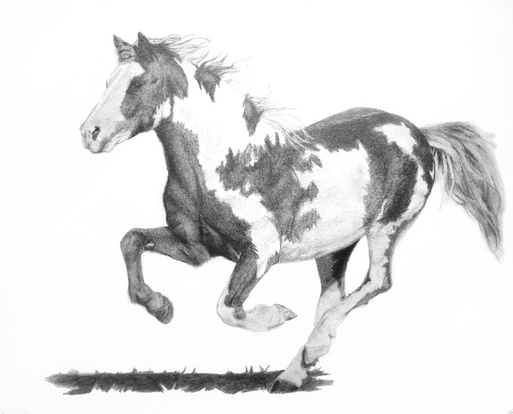 Running Mustang in Pencil. Paint Mustang. These are my ...