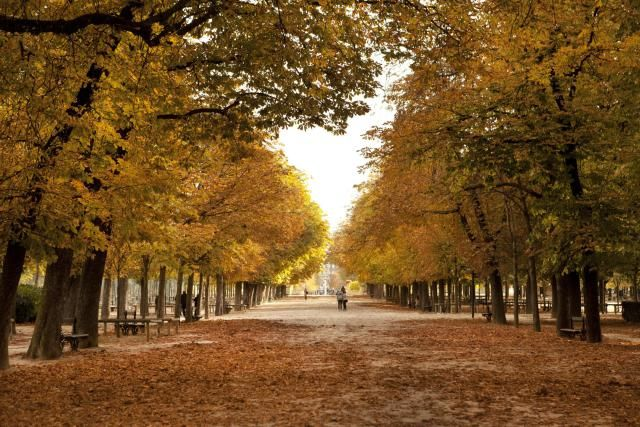 An complete guide to visiting Paris in November, including weather conditions, packing tips, and an events guide.