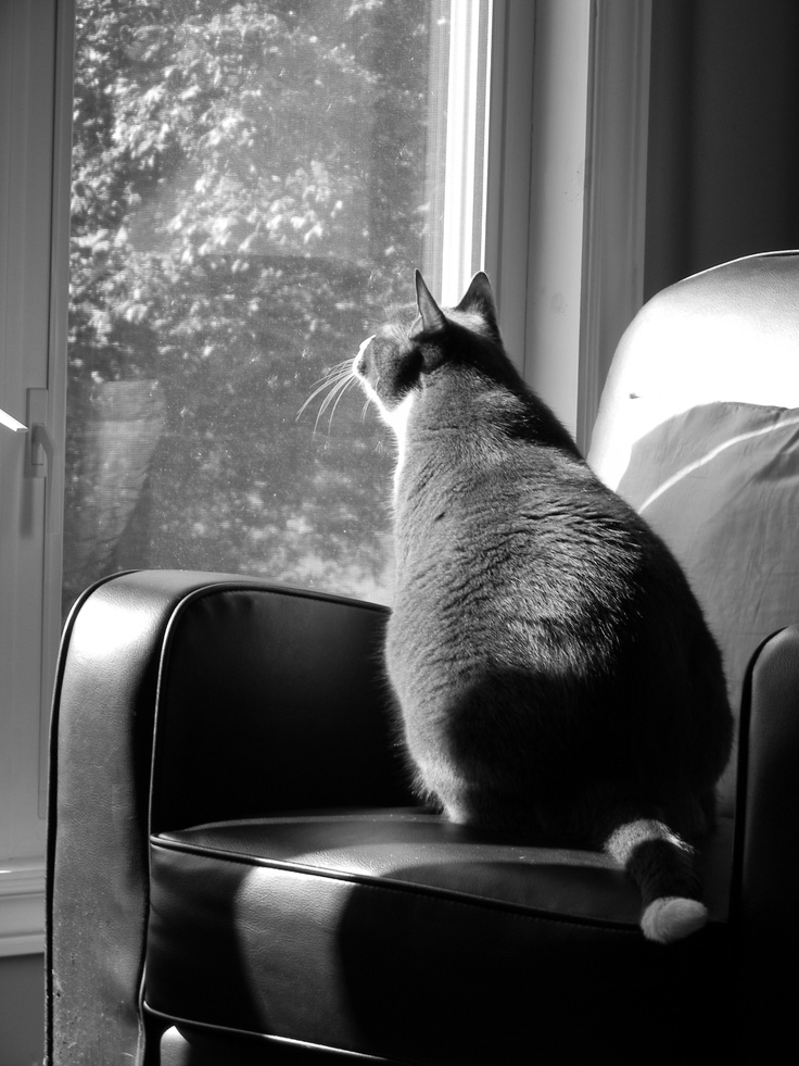 Gazing out the window on a sunny day...