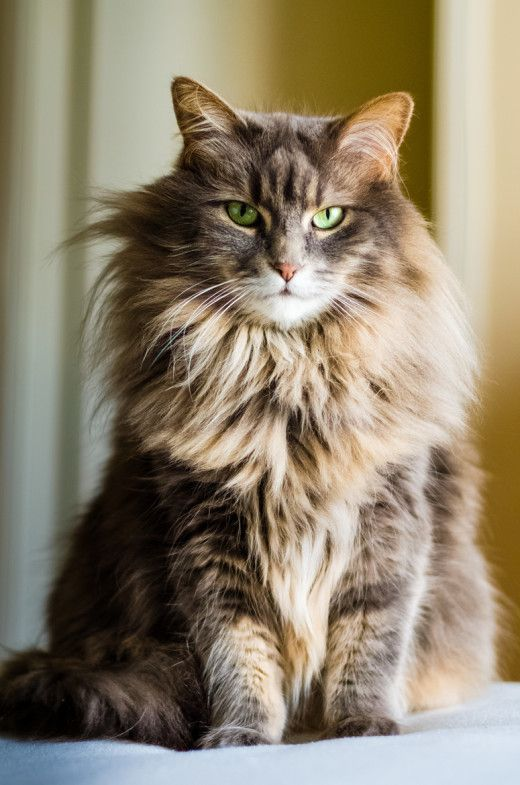 A serious impression by photogenic felines