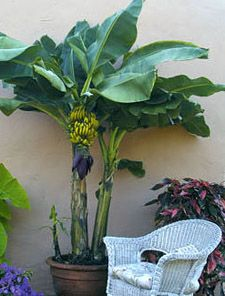 Readers' Best Container Gardening Tips    http://www.garden.org/urbangardening/index.php?page=best-container