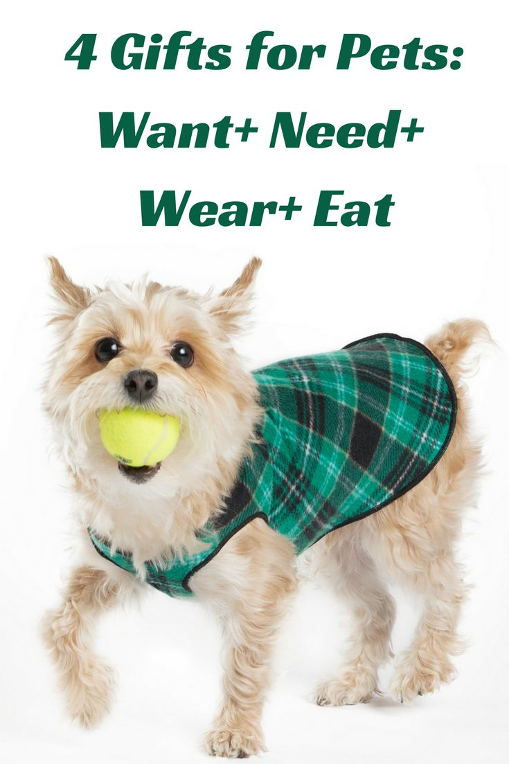 Dog Gifts For Her Part - 18: The Four Gifts For Pets Blog Hop: Want, Need, Wear And Eat ~