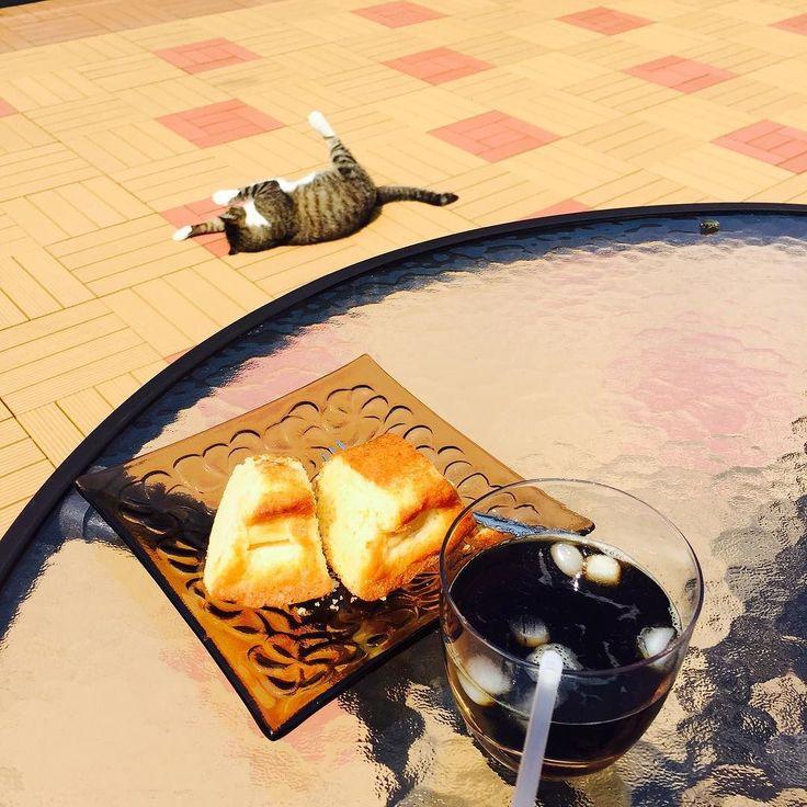 今日の朝ごはんはリンゴケーキとアイスコーヒー 晴れてるからベランダで  #ねこ #キジトラ #キジトラ白 #キジトラガール #ねこばか #華蓮 #cat #catlover by sayamimily http://www.australiaunwrapped.com/