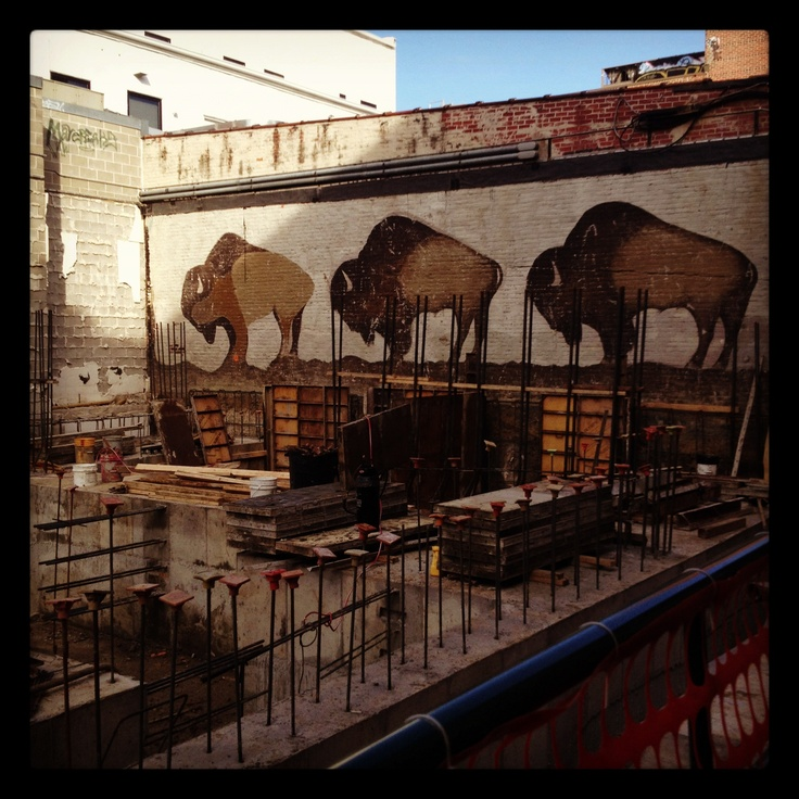 The recent tear-down of an old bank building downtown Iowa City uncovered a mural buried years ago. Three American bison are what remain of what was a larger mural painted in the 1970s by Iowa art students.  For more than 30 years the mural has been covered by the walls of a Wells Fargo bank building.