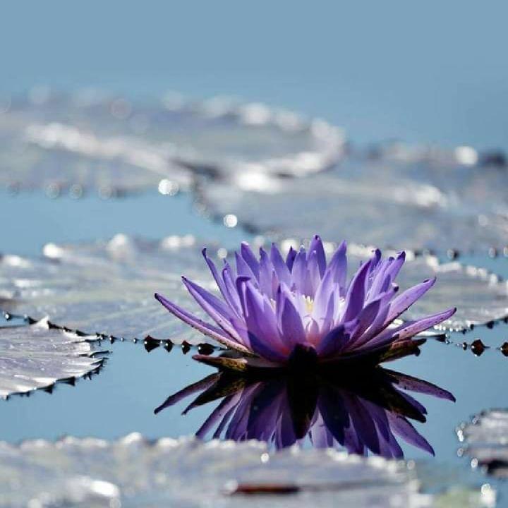 ويارب بقدر صفاء نيتي تجاه كل شخص سكن قلبي احفظ لي من يريد قربي بصدق و ابعد عني من يبتسم أمامي و يطعن بي من خلفي Gorgeous Gardens Water