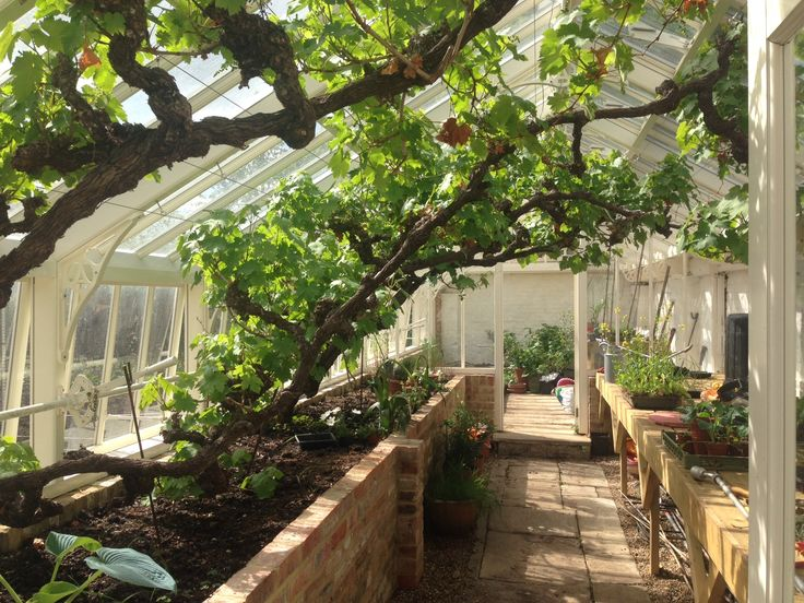 72 best Greenhouse - metal images on Pinterest | Conservatory ...
