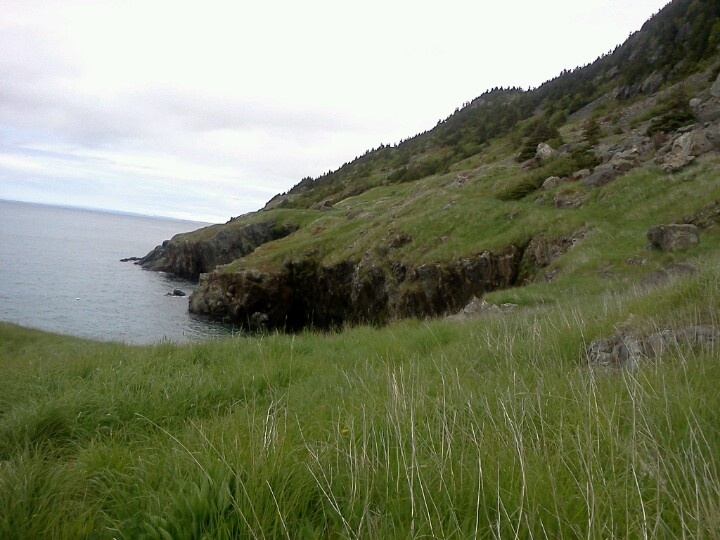 Portugal Cove - The Gees