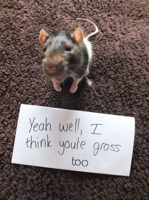 And you're all like… | What It's Like To Be Single, According To Cute Rats