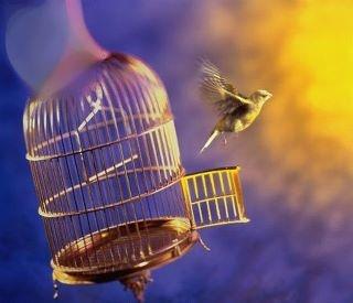 Fri fugl