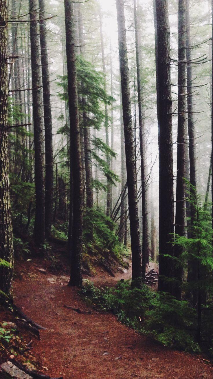 картинки на телефон фото изменение леса каждому берегу