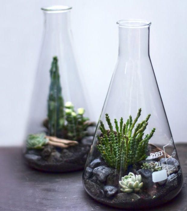 Ces terrariums sont originaux de par les fioles qui sont utilisées. Ça marche aussi dans des ballons, des béchers, et pourquoi pas des éprouvettes de chimistes !