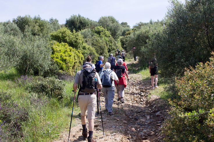 Hiking in Chalkidiki - Greece in spring time during a trigiro tour. #trigiro #tours #Greece #spring #sea #beach #hike