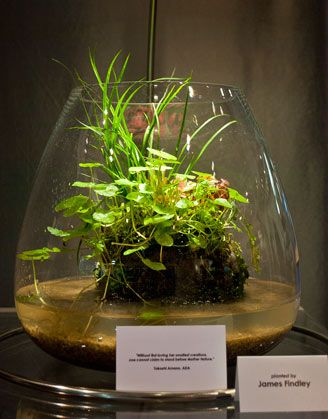 Wabi-kusa are balls of substrate that are covered with plants that are grown in their terrestrial form, very similar to plants that are grown hydroponically in nurseries. These substrate balls are placed directly into a small glass container with some water in and then allowed to grow naturally. Use to make islands in frog tank.
