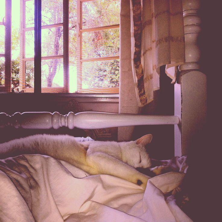 Lazy Friday morning sleep in.  @animals